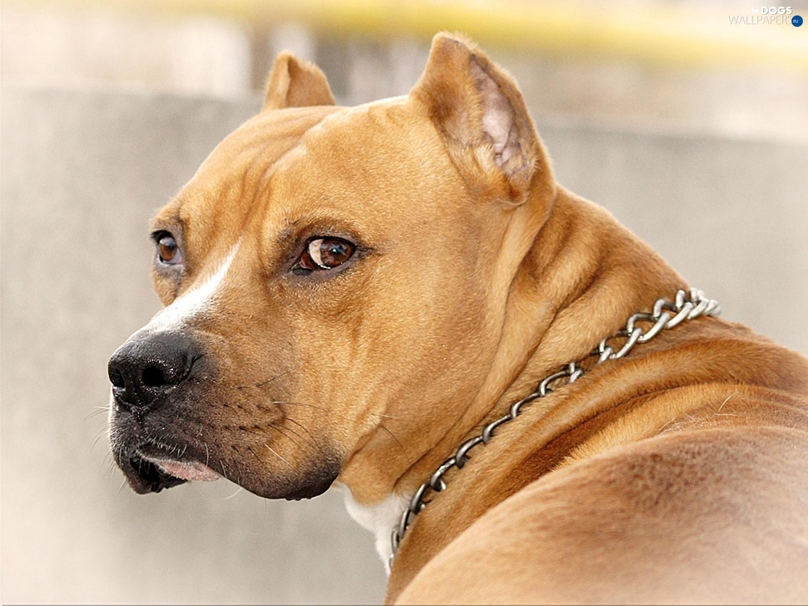 Greyhound - I Am What I Am