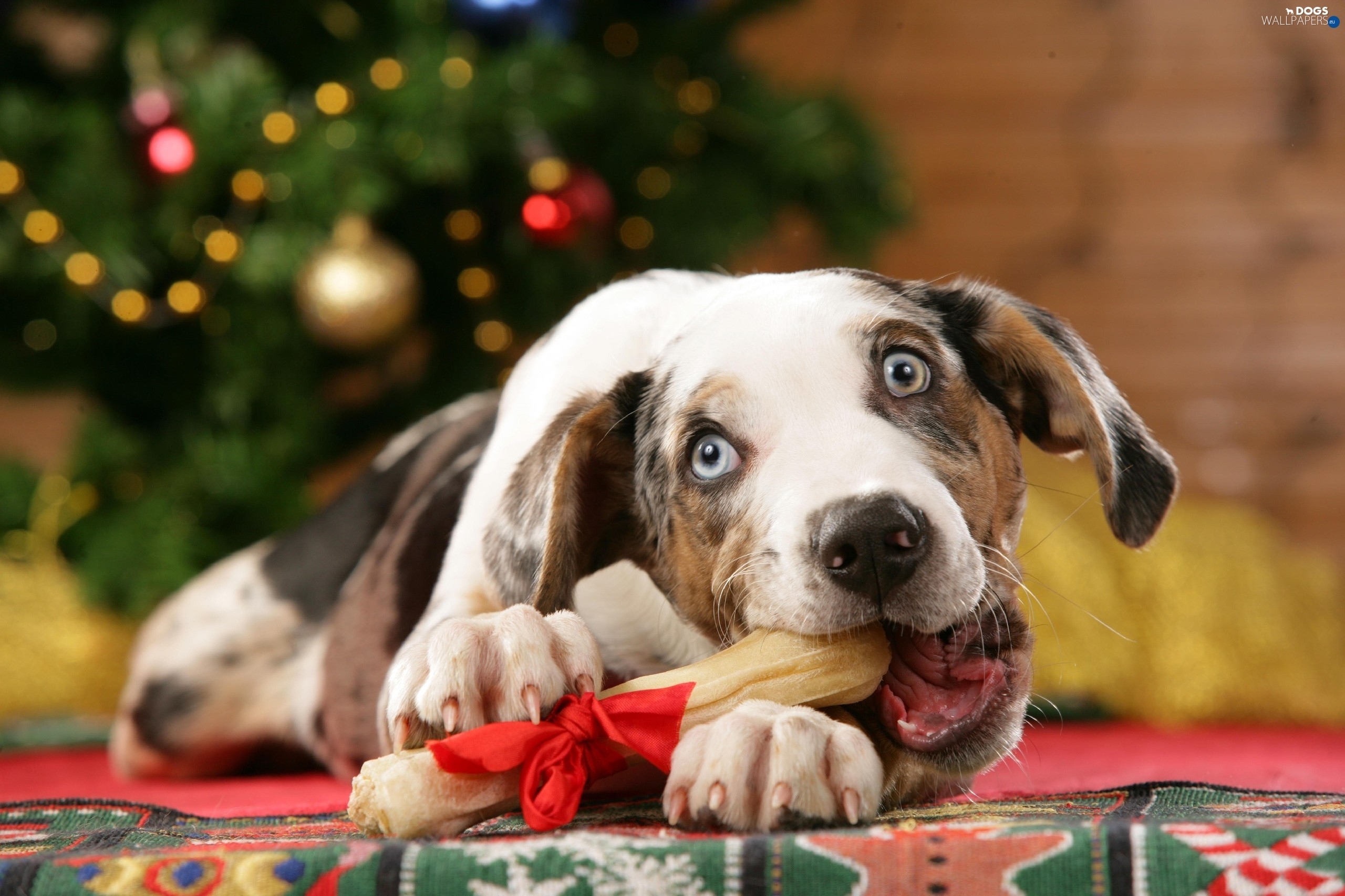 Can You Give Dogs Christmas Ham Bones