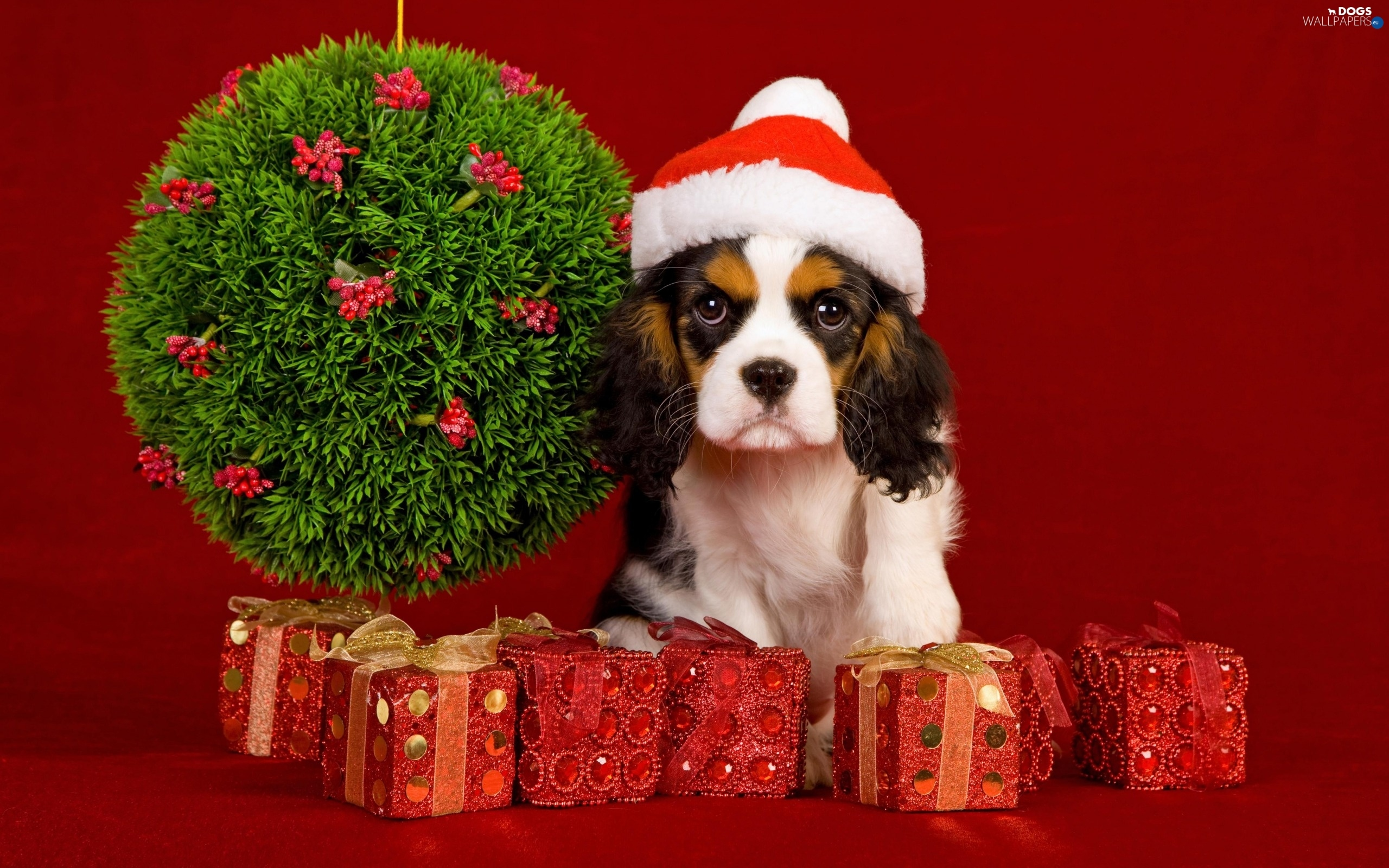 Bonnet, decor, dog, Christmas - Dogs wallpapers: 2560x1600