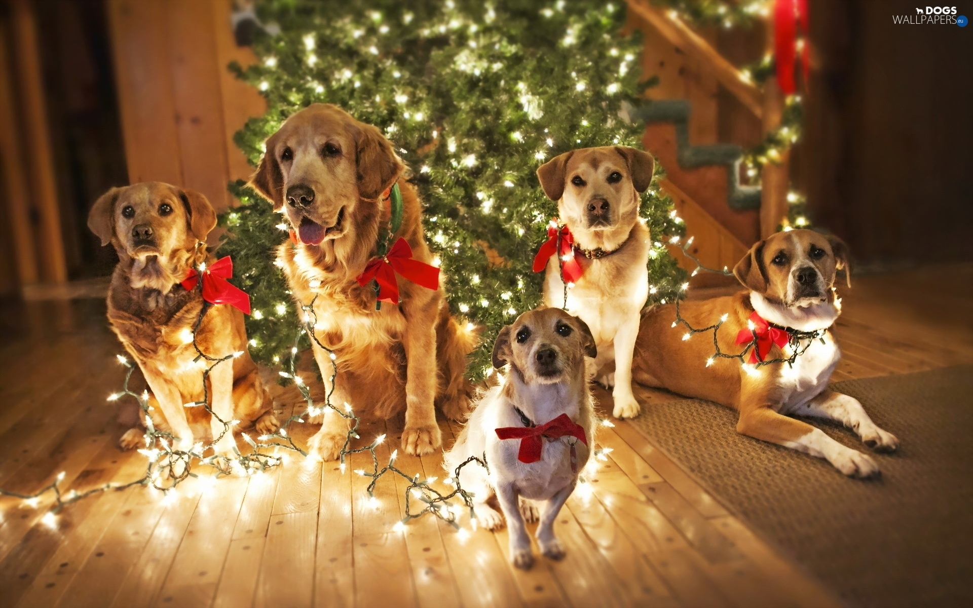 Christmas Christmas Puppies Lighting Tree