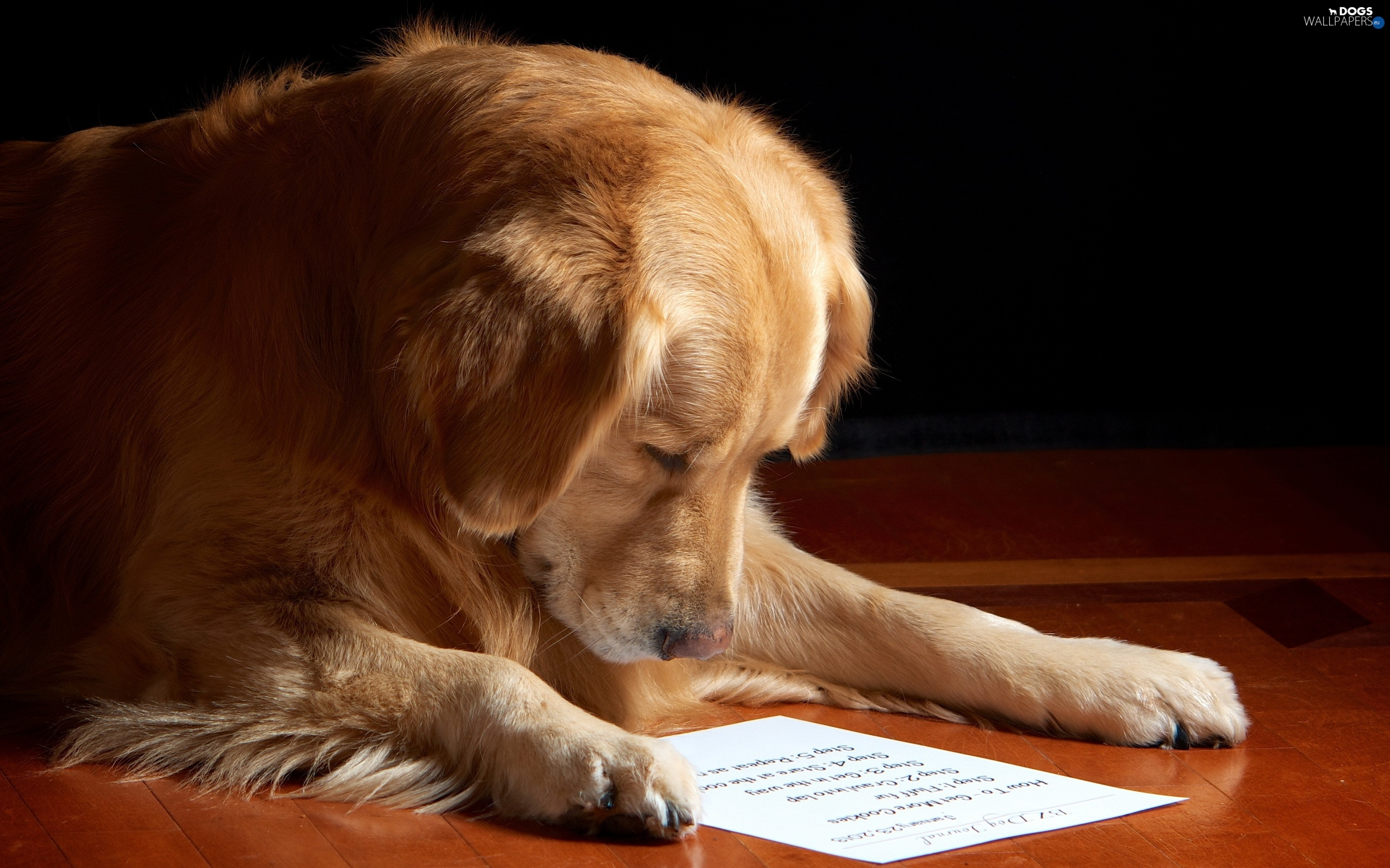 Reading Books To Shelter Dogs Makes The World A Little Bit ... |Puppy Reading