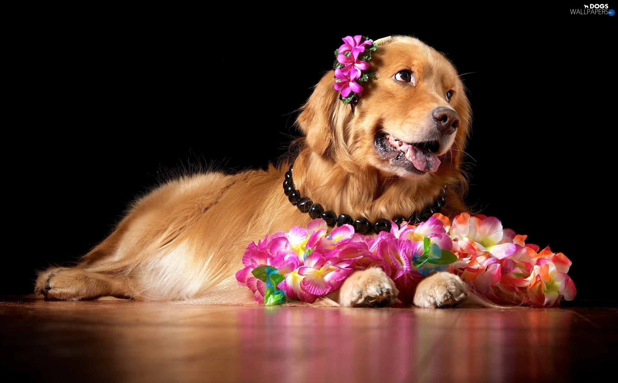 Flowers Golden Retriever Doggy Dogs Wallpapers 2048x1268