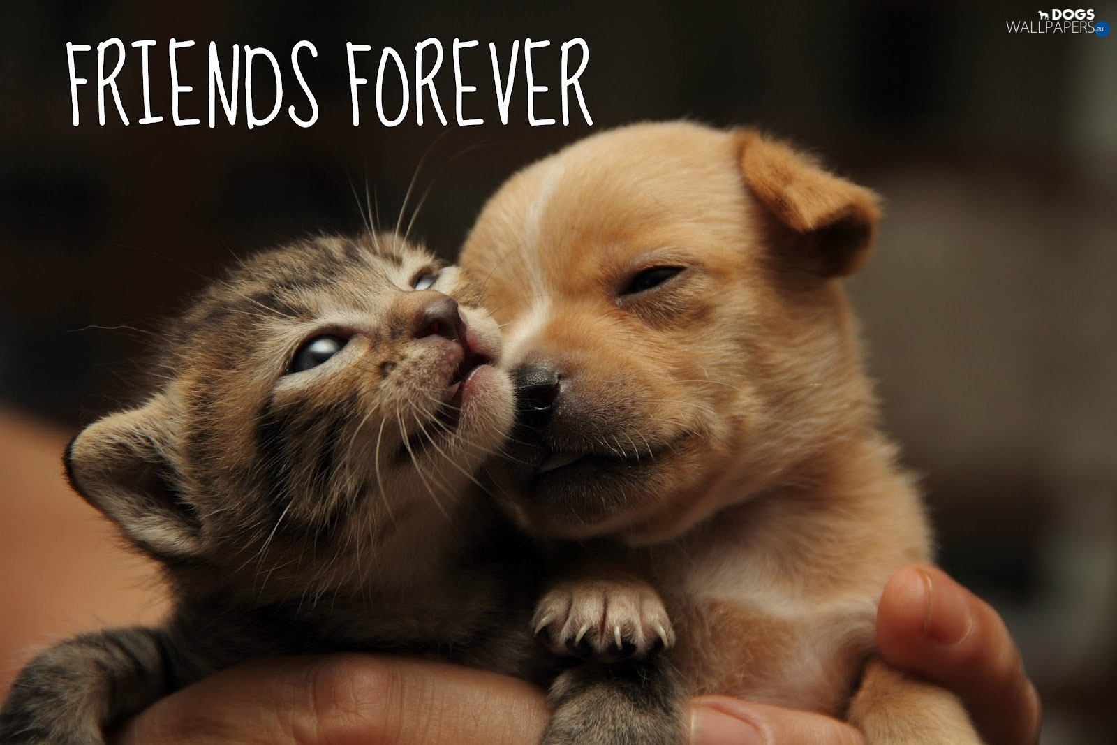 Kitten and Puppy Wallpaper Android Apps on Google Play
