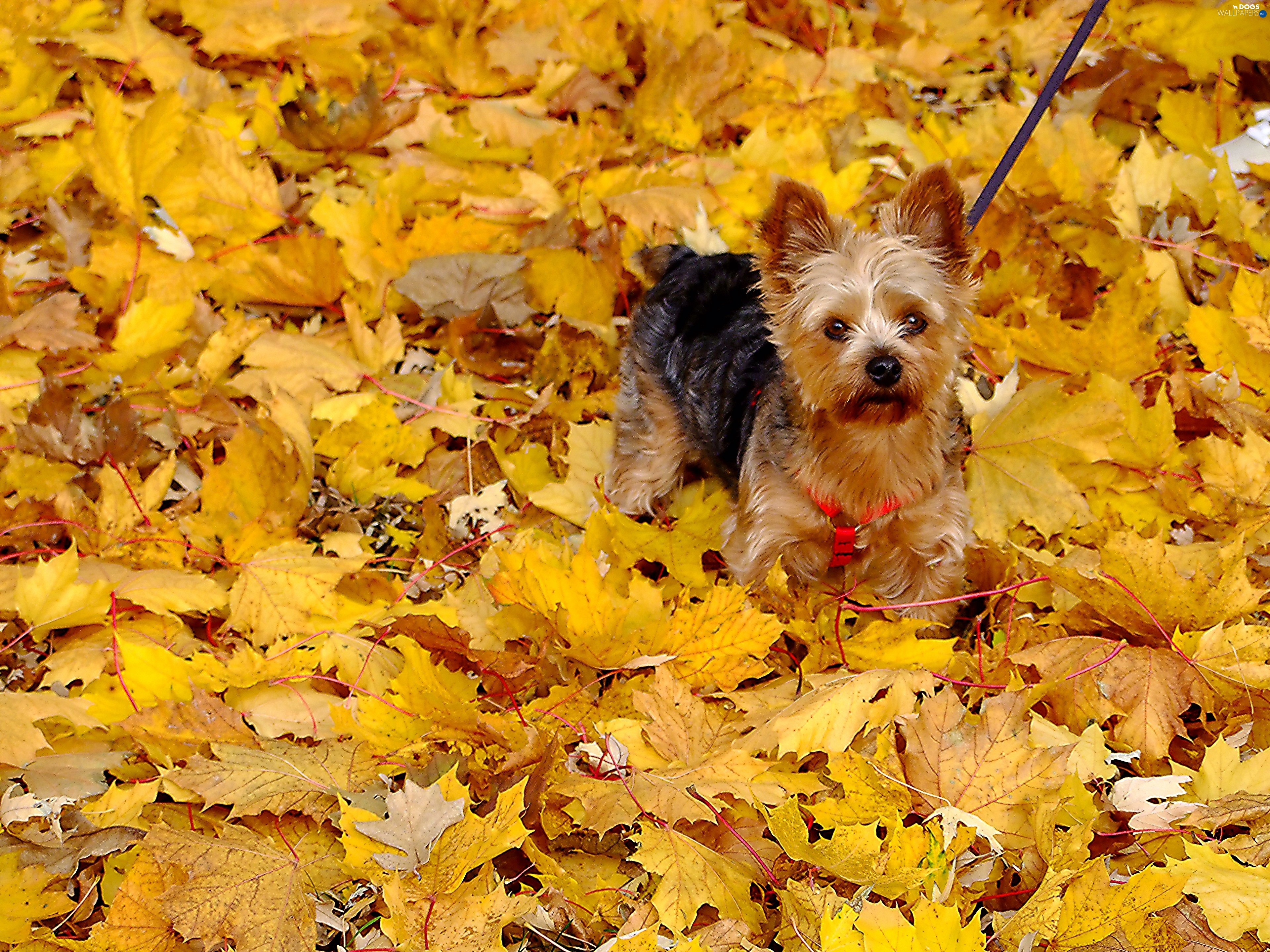 Image result for autumn in york photo