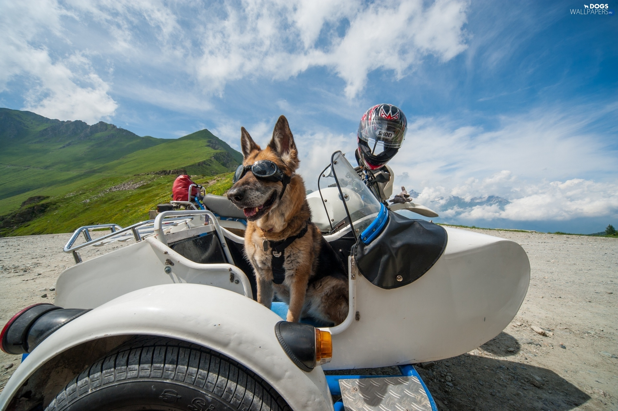 Glasses Helmet German Shepherd Funny Motor Bike Dogs: shepherds motors