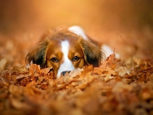 Autumn, Dutch, dog, Leaf, Alpine