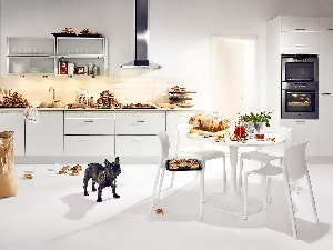 Table, sweet, Buns, Kitchen, Stool, dog