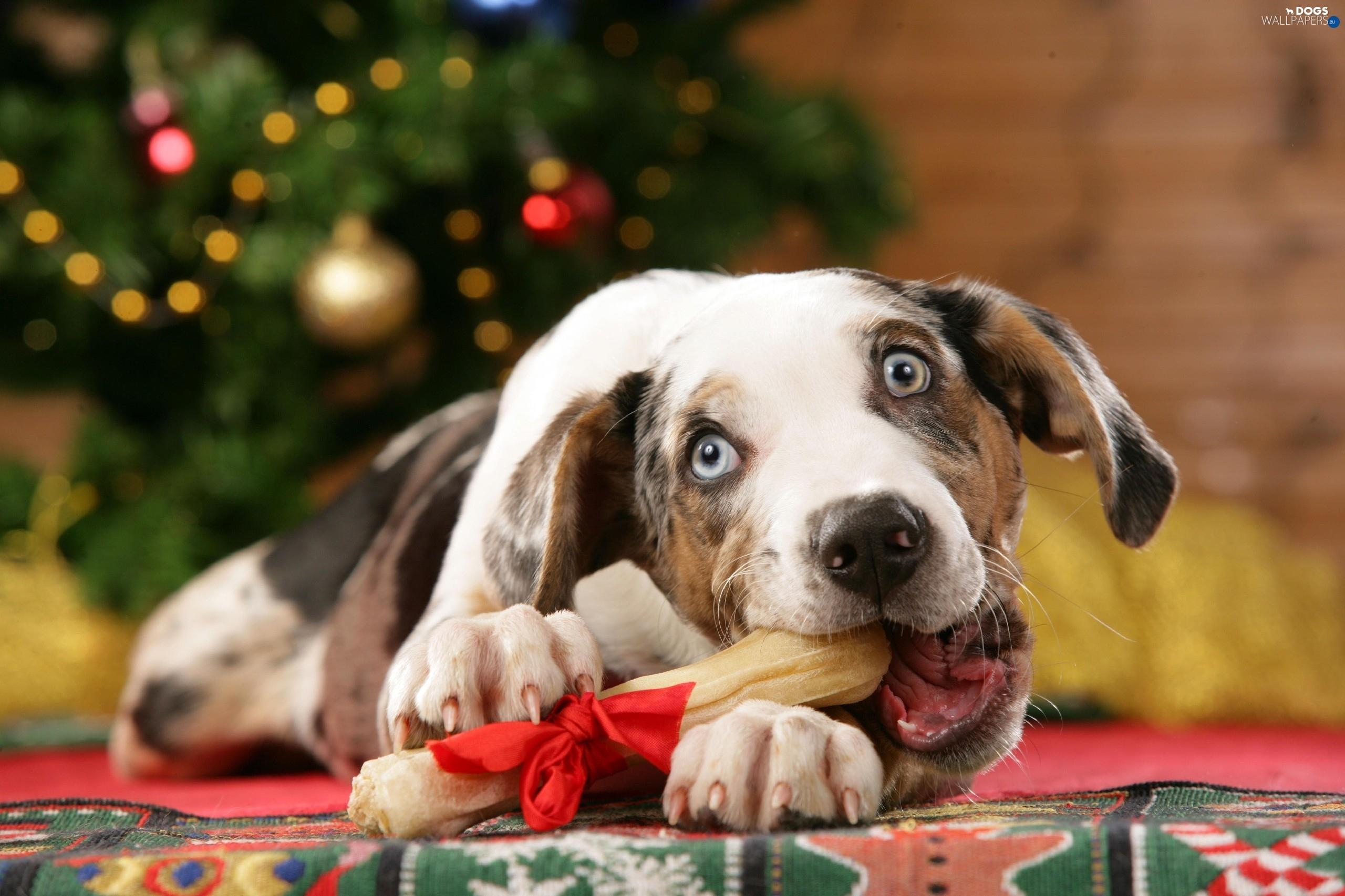 australian dog christmas tree dog bone