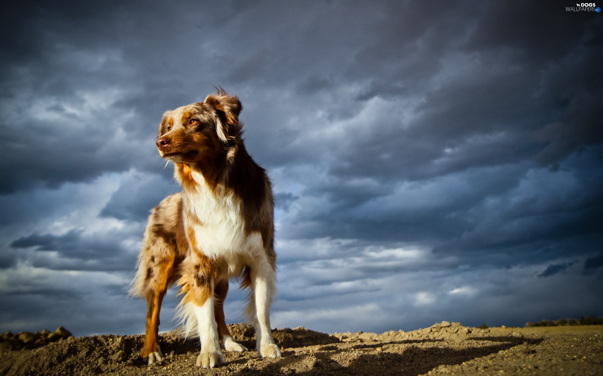 storm, clouds, dog