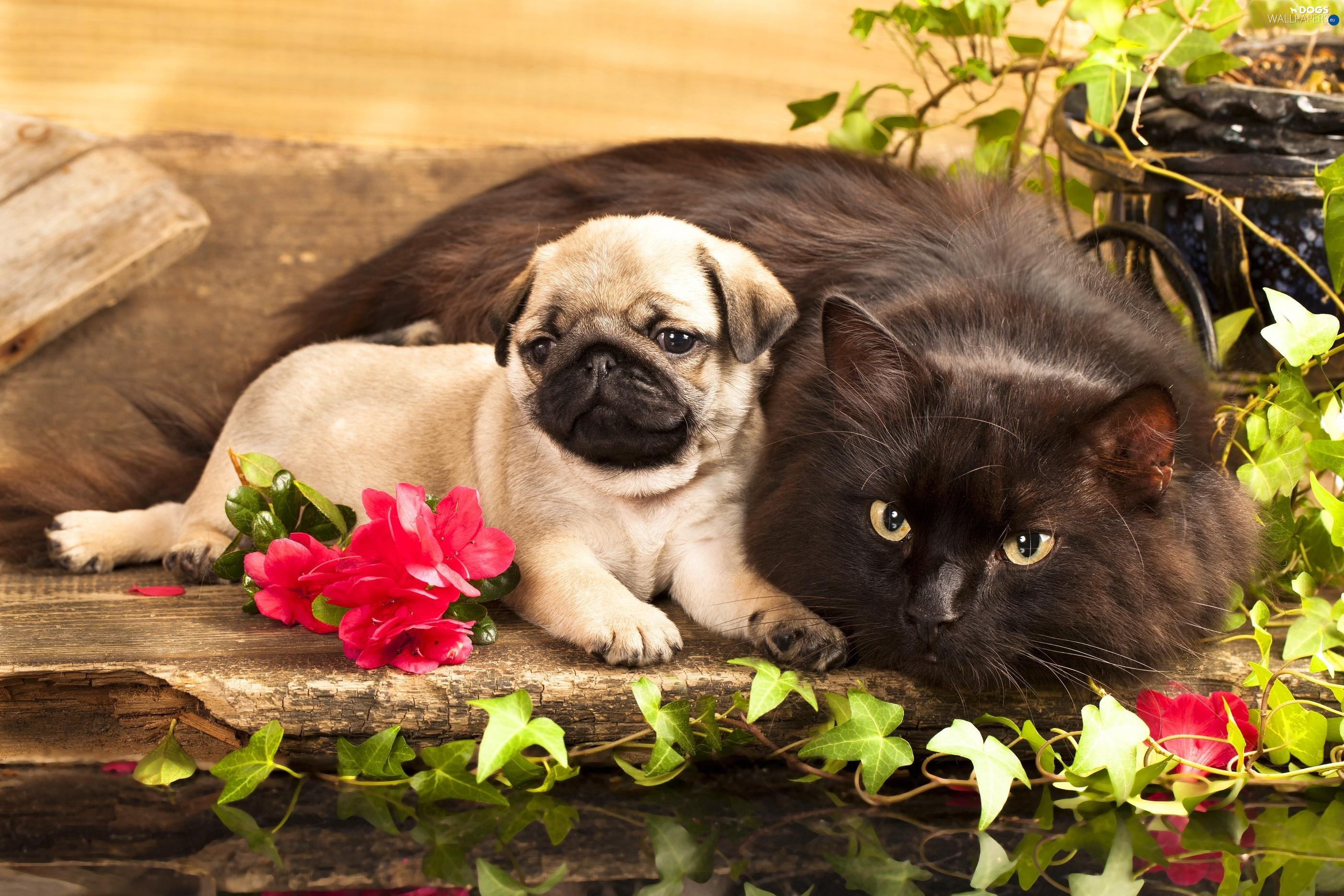 Puppy Flowers Cat Dogs Wallpapers 2800x1867