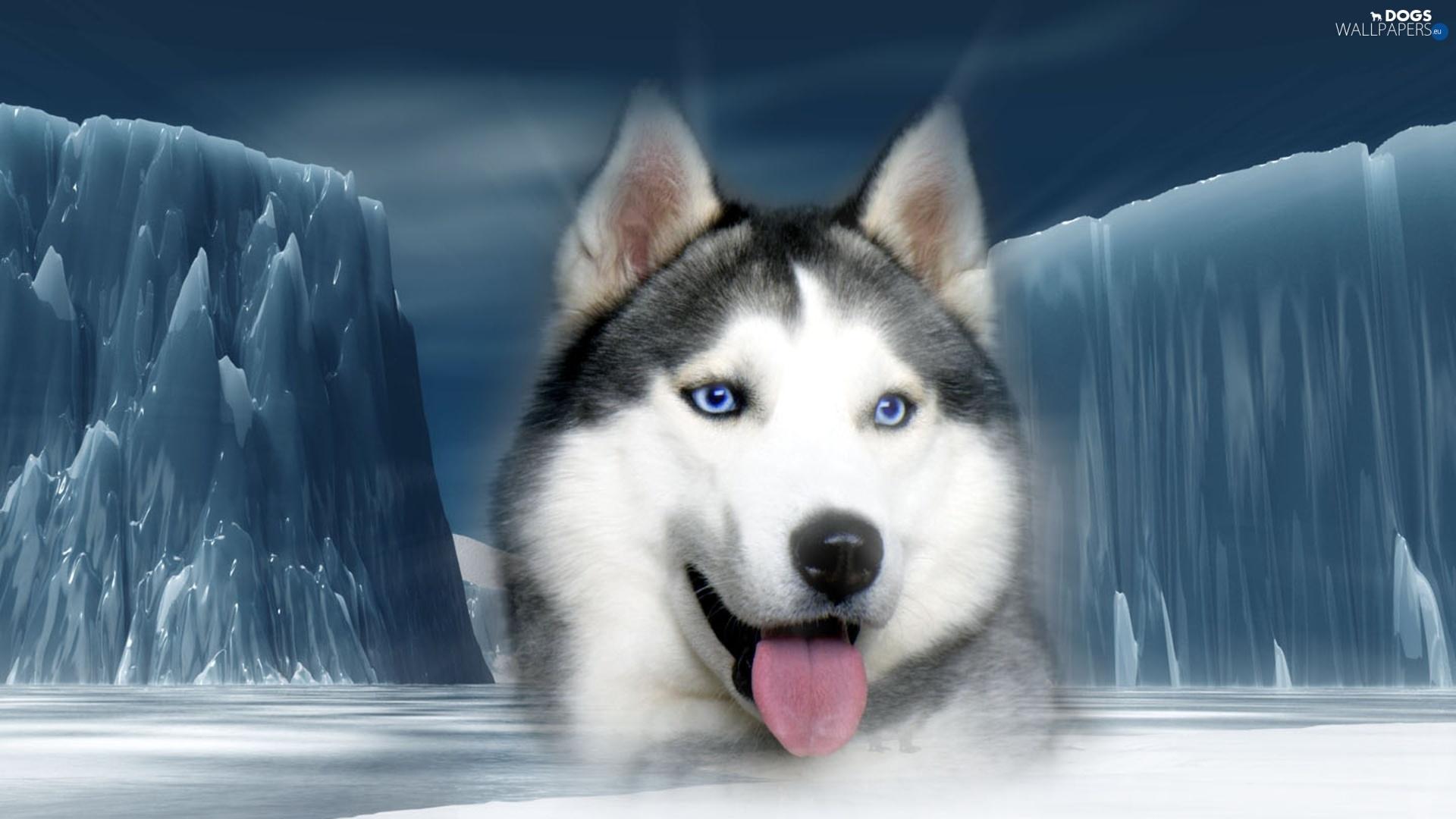 ice, mountains, siberian, husky - dogs wallpapers: 1920x1080