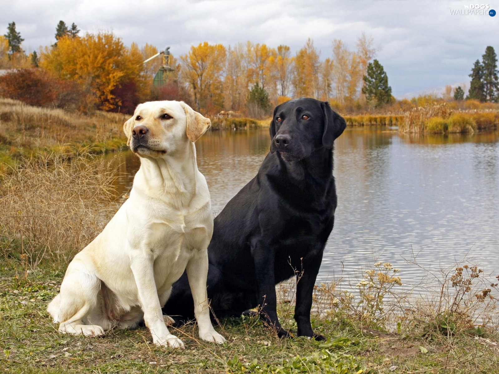 Best Cars For Labradors