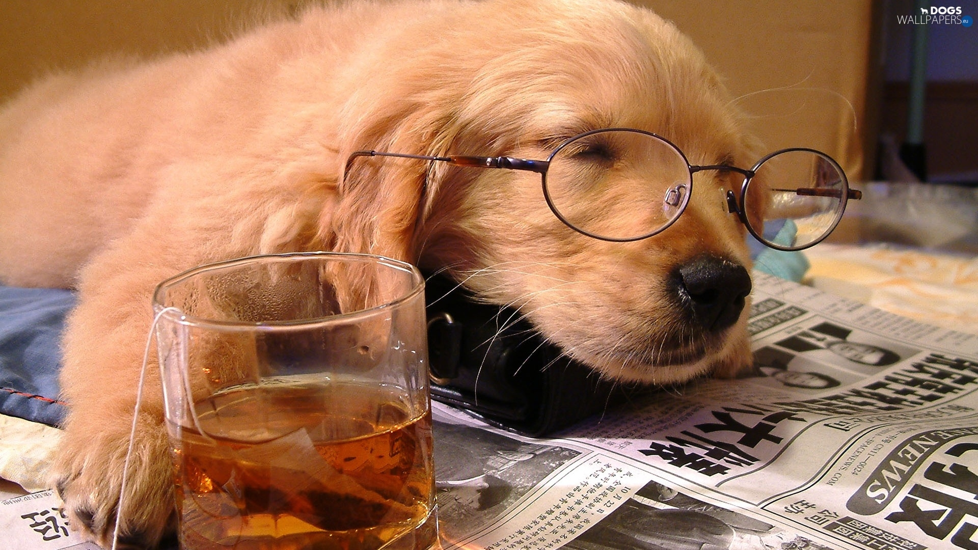 Glasses, Paper, dog