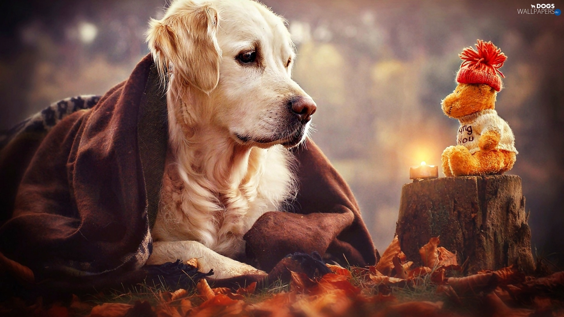 Candle Toy Teddy Bear Dog Trunk Golden Retriever Dogs Wallpapers 1920x1080