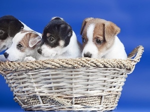 Puppies, basket, Dogs