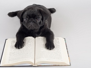 doggy, Book, Black