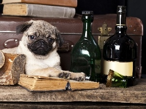 Bottles, pug, dog, Puppy