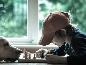 boy, chess, Golden Retriever