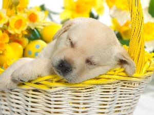 eggs, basket, Puppy, dream