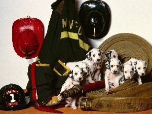 fire, equipment, puppies, Dalmatians