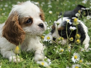 Flowers, grass, Two cars, Puppies