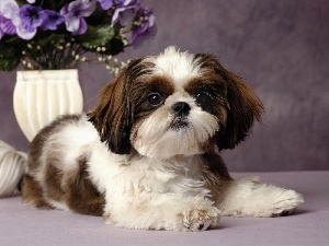 flowers, purple, doggy, Japanese spaniel