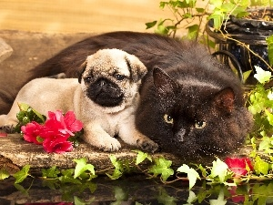 Puppy, Flowers, cat