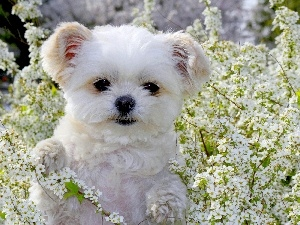 Puppy, Flowers, White