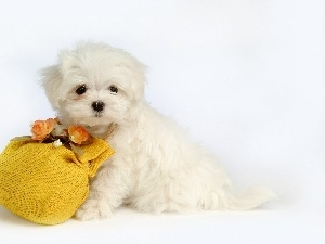 Flowers, puppie, small, White