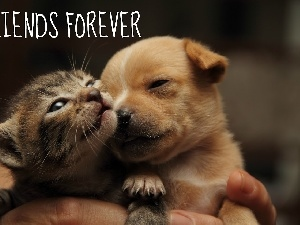 Friends, kitten, doggy, Puppy