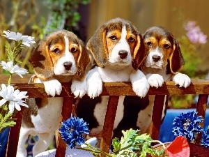 Puppies, Hurdle, Three