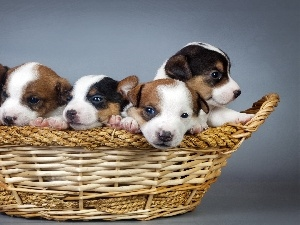 Lovely animals, basket, puppies, basket