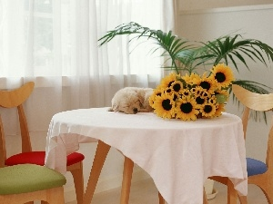 small, Nice sunflowers, interior, little dog, peace