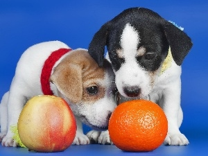orange, Apple, Dogs, Puppies