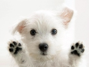 paws, doggy, White, small
