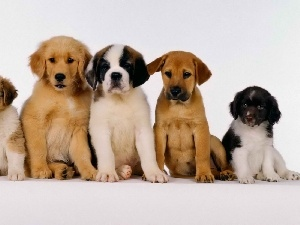 dogs, puppies, five