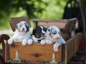 Three, Puppies, trolley
