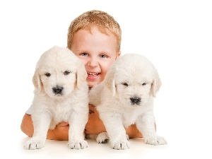 puppies, White, boy, Two cars