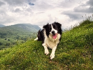 Sky, Clouds, Border Collie, Mountains