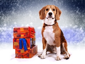 snow, incident, Beagle, gifts