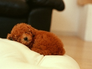 dog, sofa, sleepy