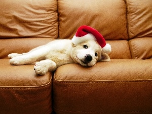Sofa, Hat, White, Puppy
