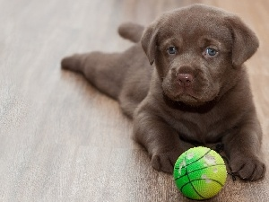 sweet, Puppy, dog, Ball