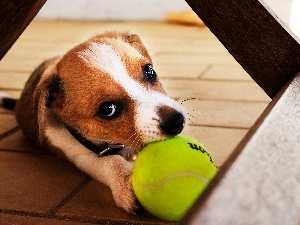 tennis, Do, dog, play, Ball