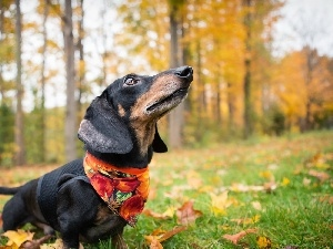 trees, forest, dachshund, viewes, dog