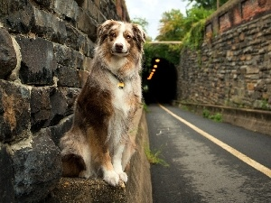 Way, tunnel, dog