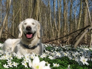 viewes, trees, Golden Retriever, Flowers
