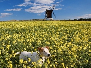 Windmill, Plants, dog, Field