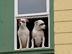 Glasses, Window, Dogs